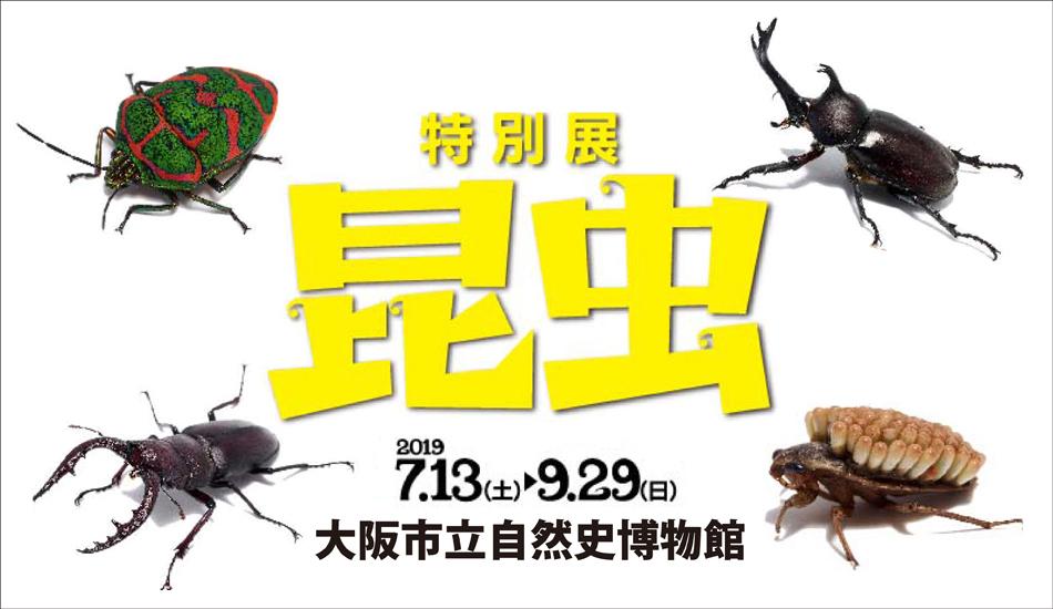 自然史博物館、昆虫